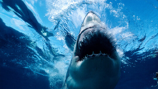 How a Sharknado Would Work