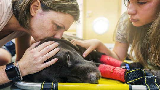 Caring for Sick Pets Creates Heavy Emotional Burdens