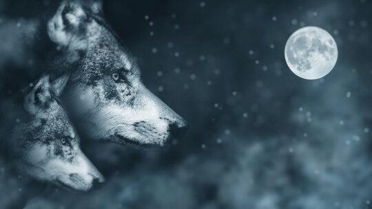 The Skinwalker Is No Mere Werewolf