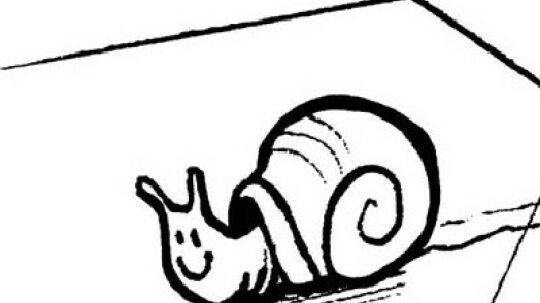 Snail Activities