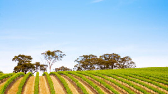 Ultimate Guide to South Australian Wine Regions