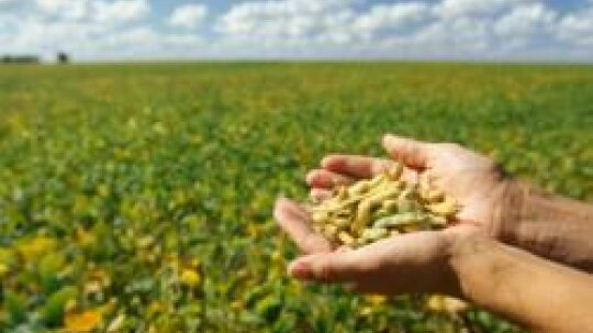 Soybeans: Natural Weight-Loss Foods