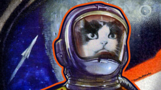 Félicette, the First Feline in Space, Finally Got Her Due