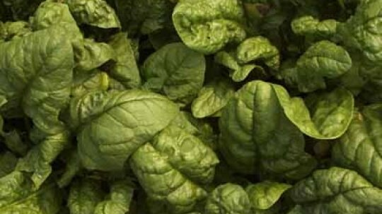 Spinach: Natural Weight-Loss Foods