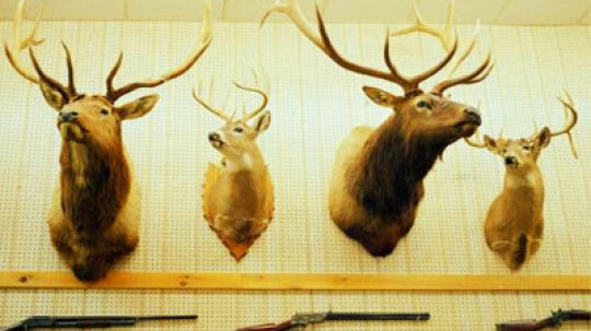 How Sport Hunting Works