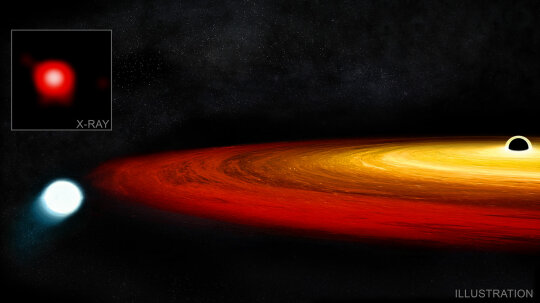 This Star Survived Being Swallowed by a Black Hole