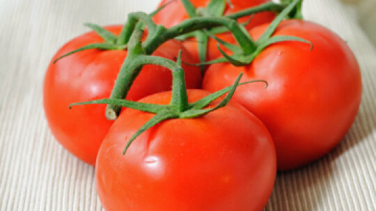 Can you have a skin allergy to tomato plants?