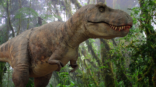 Tyrannosaurus Rex Was the Tyrant Lizard King