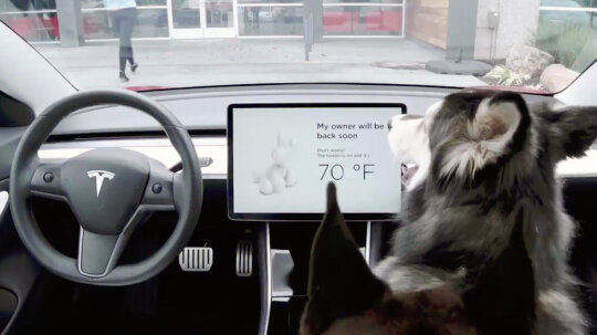 Tesla Dog Mode Keeps Pets Cool in Locked Cars
