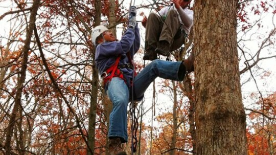How Tree Climbing Works