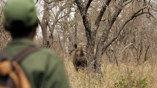 How Trophy Hunting Works