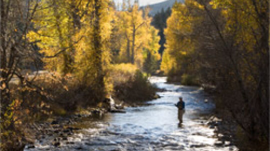 Top 5 Trout Fishing Gear Essentials