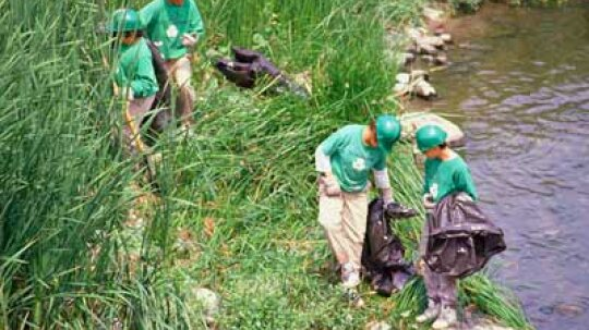How to Volunteer to Help the Environment