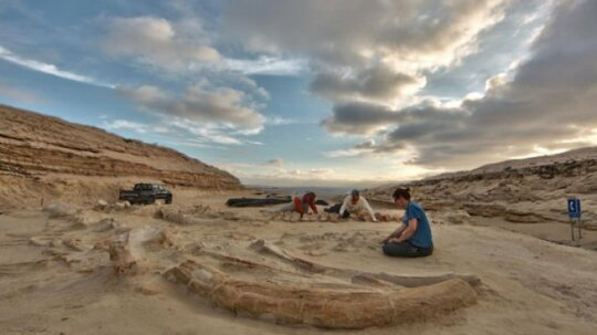 Our Top 10 Stops on A Fossil Road Trip