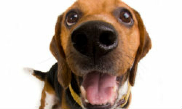 How to Help Prevent Allergies to Dogs