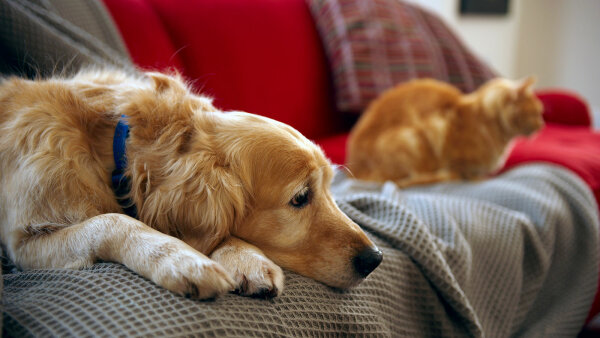 Why Do Dogs (and Cats) Shed So Much?