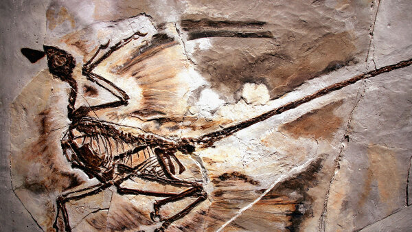 Velociraptor Alert: The Feathered Dinosaur Quiz