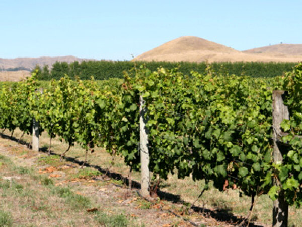 Ultimate Guide to the Hawke's Bay Wine Region