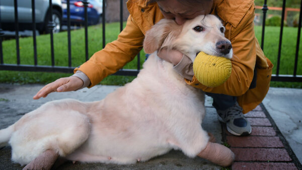 Adopting a Pet Can Be Hard; We Have 8 Tips to Make It Easier