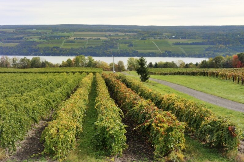 Plan to stop by one of New York's vineyards along the way. jimfeng/iStock/Thinkstock