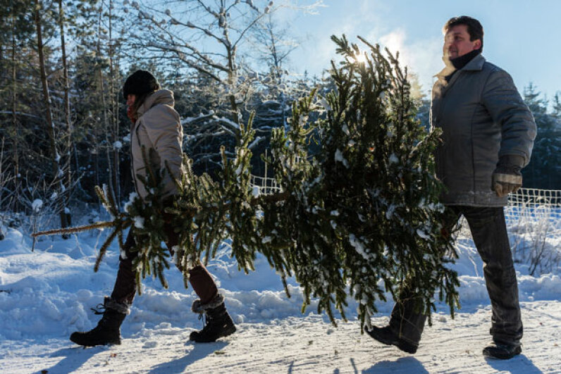 Christmas trees, even real ones, aren't that likely to catch on fire. Joern Haufe/Getty Images