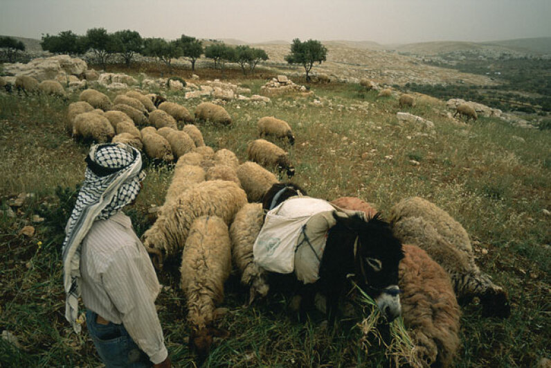 The presence of shepherds in the fields during Jesus' birth could be one clue it didn't take place in December. Reza/Getty Images News/Getty Images