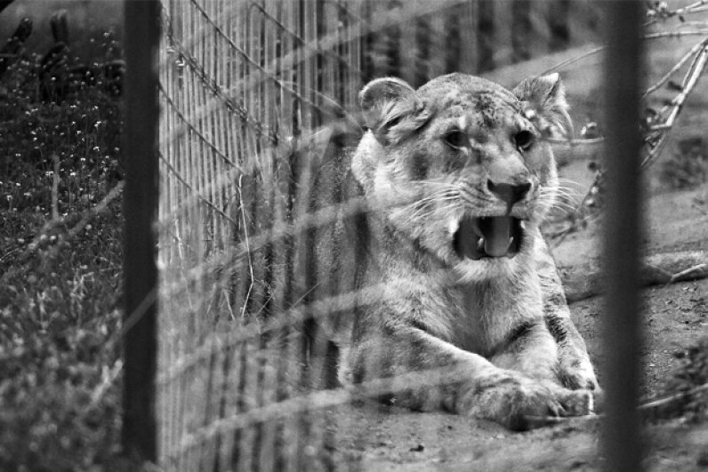 Many circus animals actually have failry nice happy endings after their years of service. Fresno Bee/Getty Images