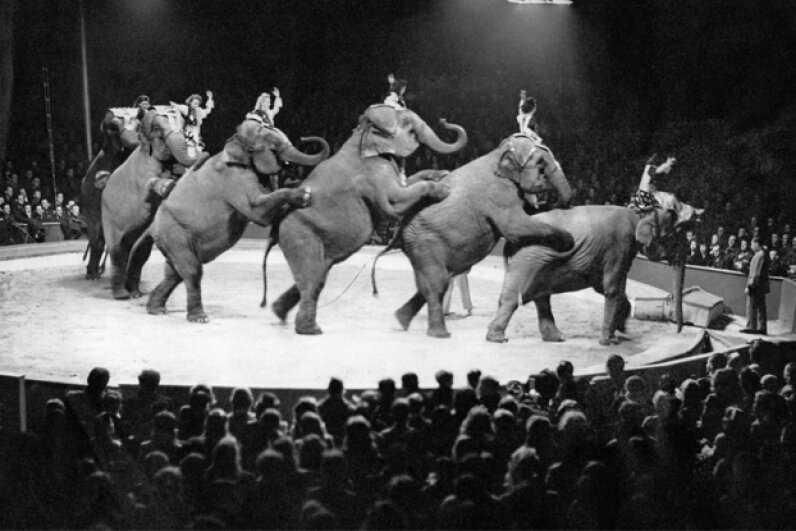 Synchronizing elephants is no easy feat, and the circus industry has cut many corners ethics-wise over the years. Keystone-France/Getty Images