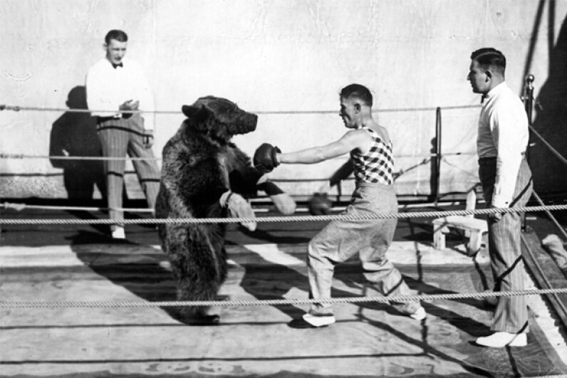 Boxing a bear might be more brutal on the human than the bear. General Photographic Agency/Stringer