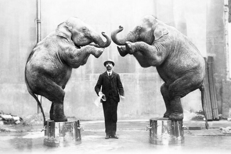 Circus animals probably work a lot harder than many of your favorite human performers. ullstein bild/Getty Images