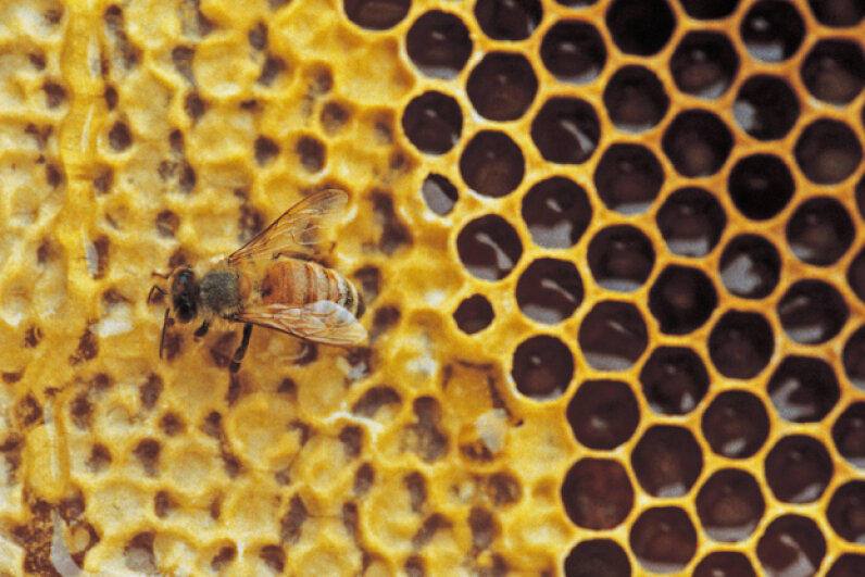 Although some might think multicolored honey is a sweet idea, the proud beekeepers of Ribeauville, France, disagree. Comstock/Comstock/Thinkstock