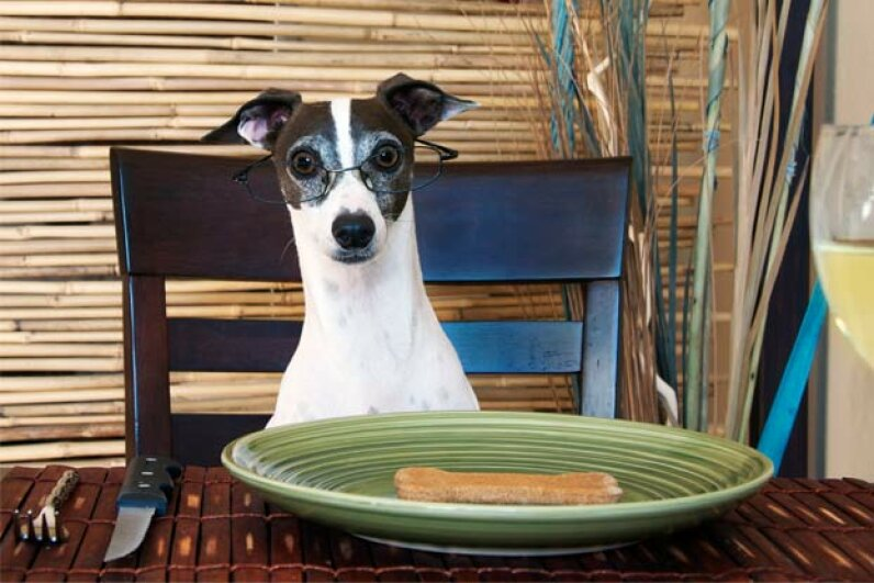 This dog brandishes a bit of self-control before he begins dining. iStockphoto/Thinkstock