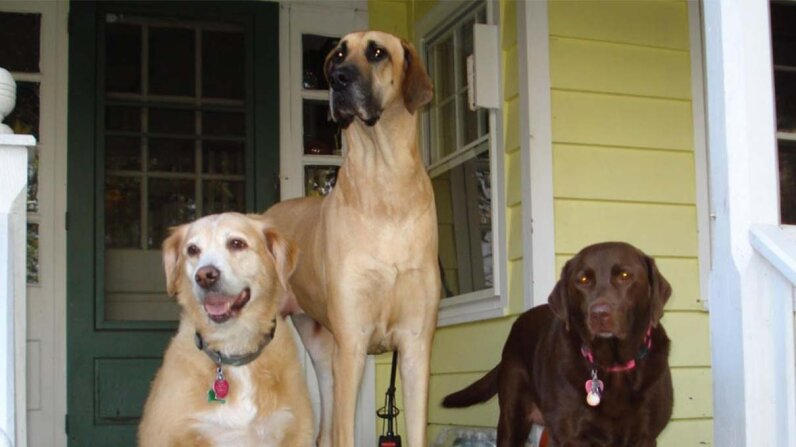 dogs, photo