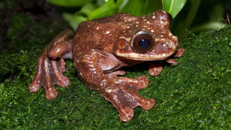 frogs, extinction