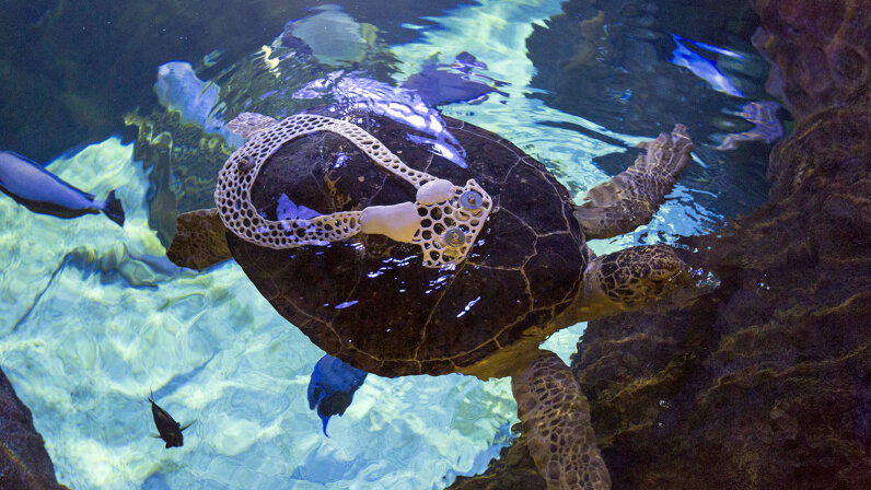 Seemore turtle
