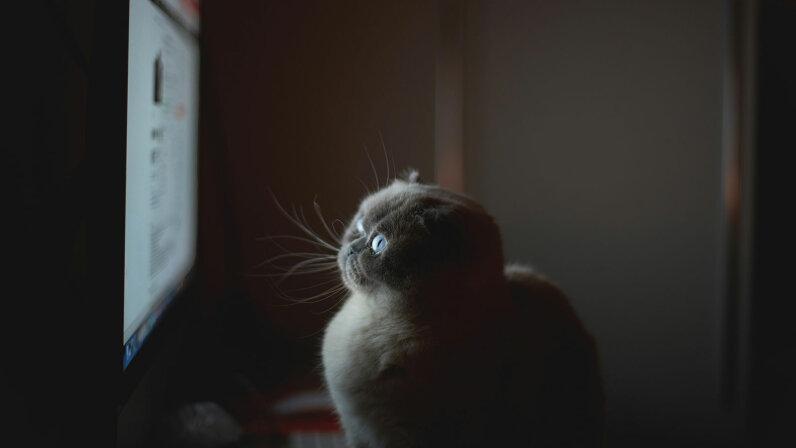 cat looking at TV