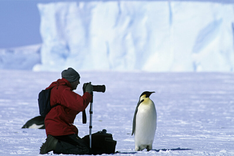 Photographing an Emperor penguin (Aptenodytes forsteri) Weddell Sea, Antarctica. Kim Heacox/Getty Images