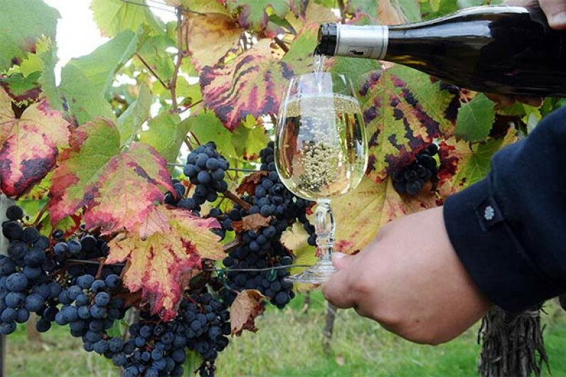 This Cahors white wine was made with the red grapes pictured, in Cahors, France. REMY GABALDA/AFP/Getty Images