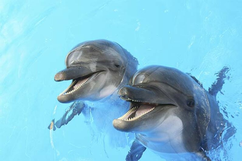 Are those dolphins happy to see you or about to attack? Either way their expressions won't change. Alesik/iStock/Thinkstock