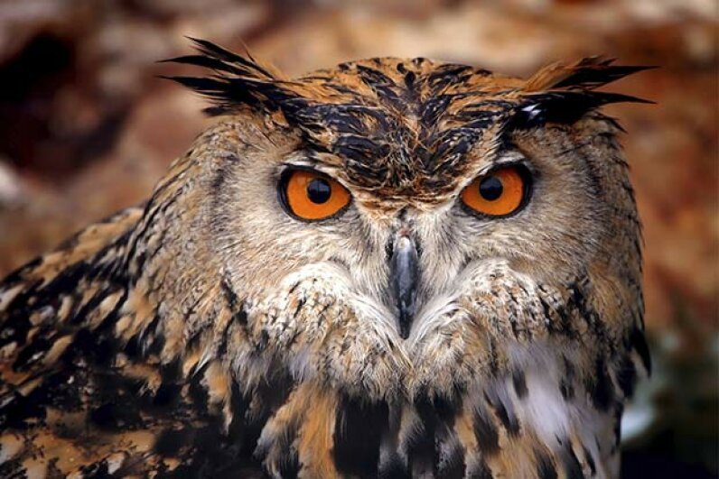 4: Owls Are Wise - Owls Are Wise - Animal Sterotypes ...