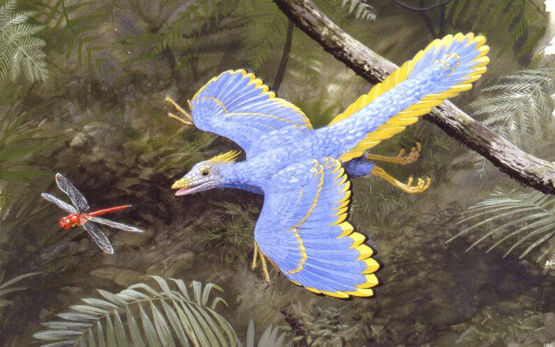 Archaeopteryx illustration
