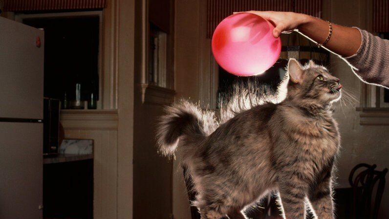 You can try this with your cat too. © Roger Ressmeyer/Corbis/VCG/Getty Images