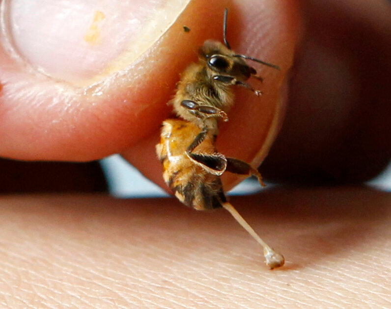 Nobody WANTS to get stung by a bee, right? Actually, yes they do.