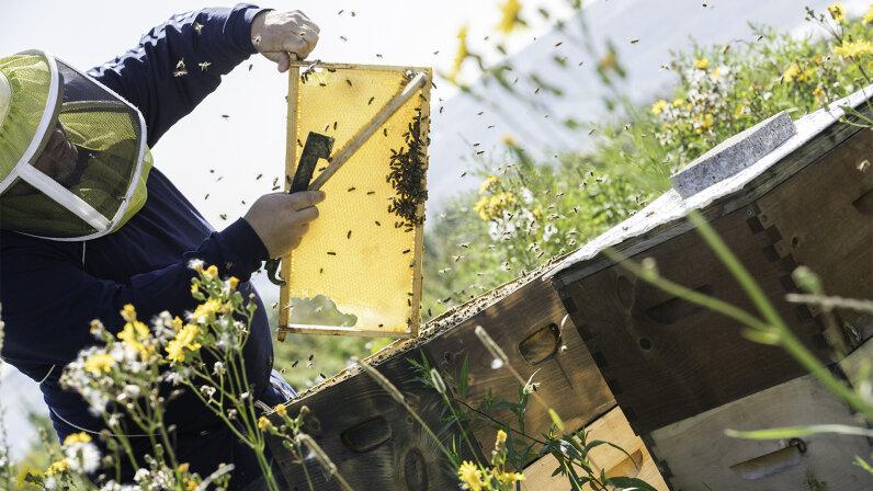 bees, beekeeping