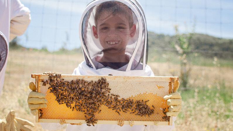 kid, beekeeping