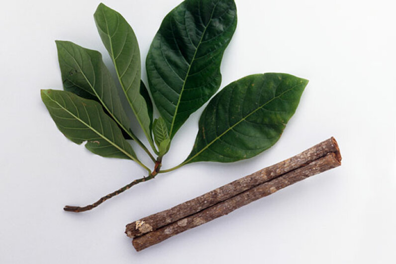 The bark of the cinchona tree was used to make quinine, a cure for malaria. Dorling Kindersley/Getty Images