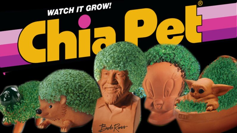 Ch Ch Ch Chia You Know The Jingle Now Hear The Chia Pet Story Howstuffworks
