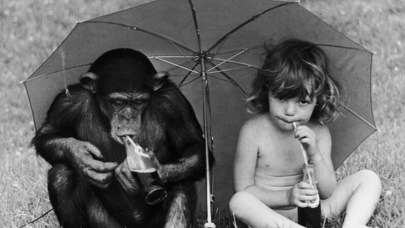 chimp, child