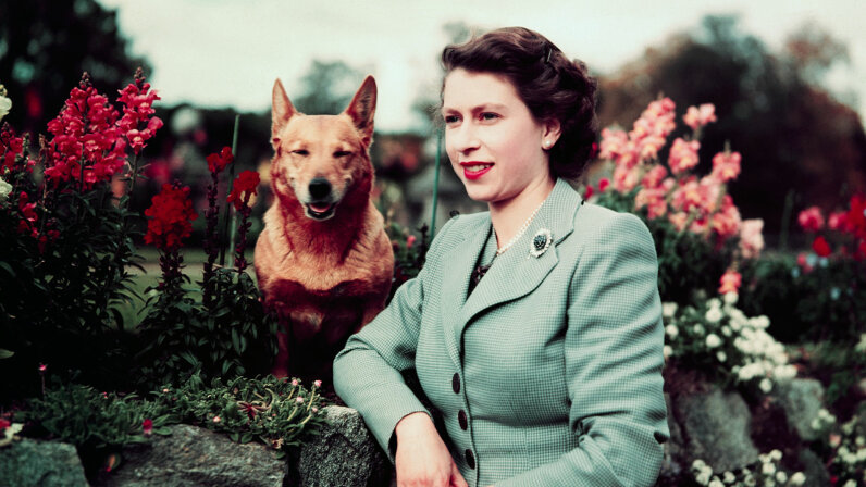 Queen Elizabeth, corgi
