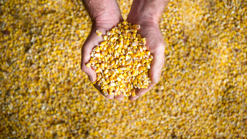 Increased crop yields will affect global food supply and demand over the coming years, according to a new United Nations analysis. Edwin Remsberg/Getty Images